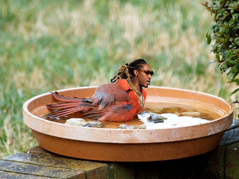 WHEN THEM BIRDS TAKE A BATH AND WATCH EM COME OUT CLEAN #FutureHive http://t.co/pVu6ENWeWA