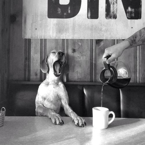 moin erstmal Kaffee zum wach werden und dann sehen wir weiter :) Kommt gut in den Mittwoch <3 🍵 🍵 🍵 🍵