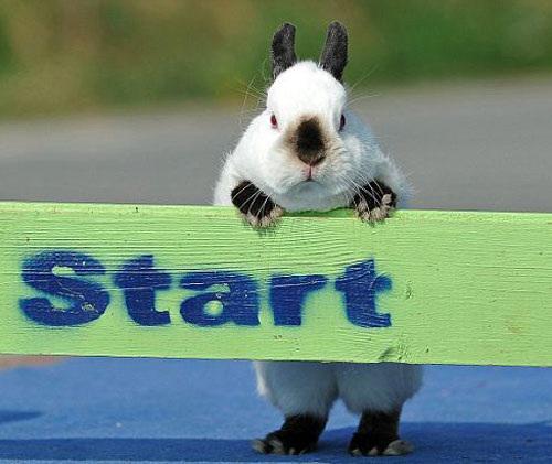 Rabbit on Twitter: