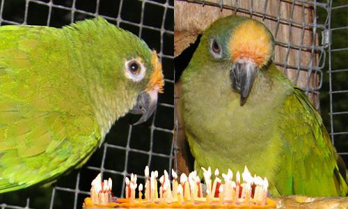 happy birthday conures on twitter