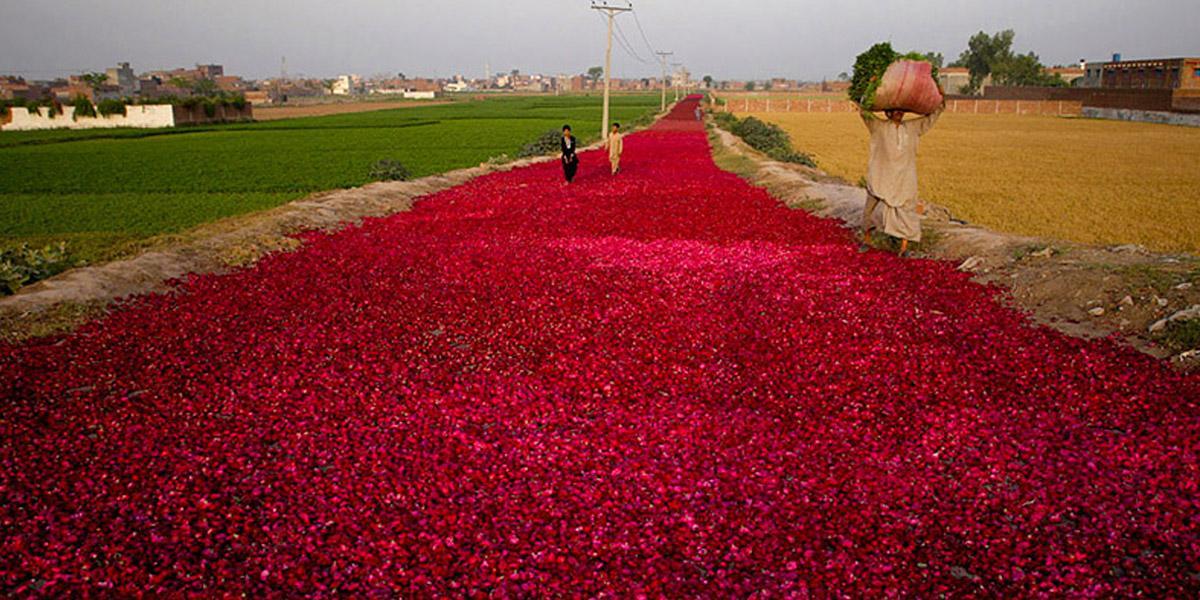 Миллион роз картинки красивые, узбекские приколы
