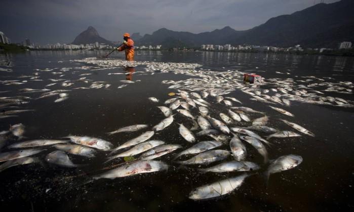 Olimpiadi Rio 2016, mistero pesci morti nel lago delle gare di canottaggio