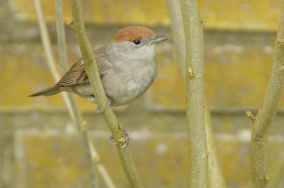 gewonde vogel in de tuin