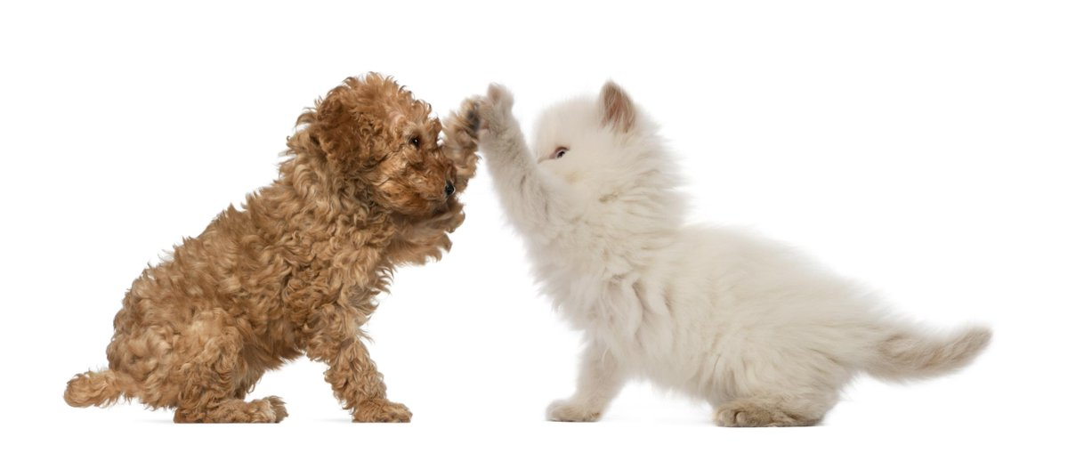 Give us some paw for #NationalHighFiveDay http://t.co/A3uPA7ahYI