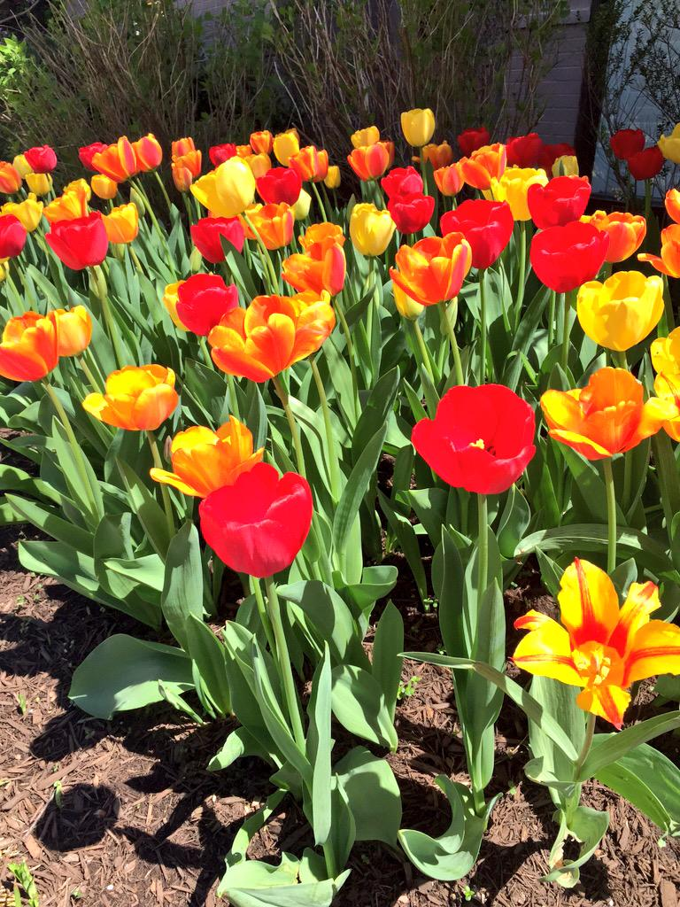 Zac barnett on twitter some real pretty flowers before i left dc zac barnett on twitter some real pretty flowers before i left dc for chicago oh ya im in chicago now its pretty cool so far httptqxvnuemgoc mightylinksfo