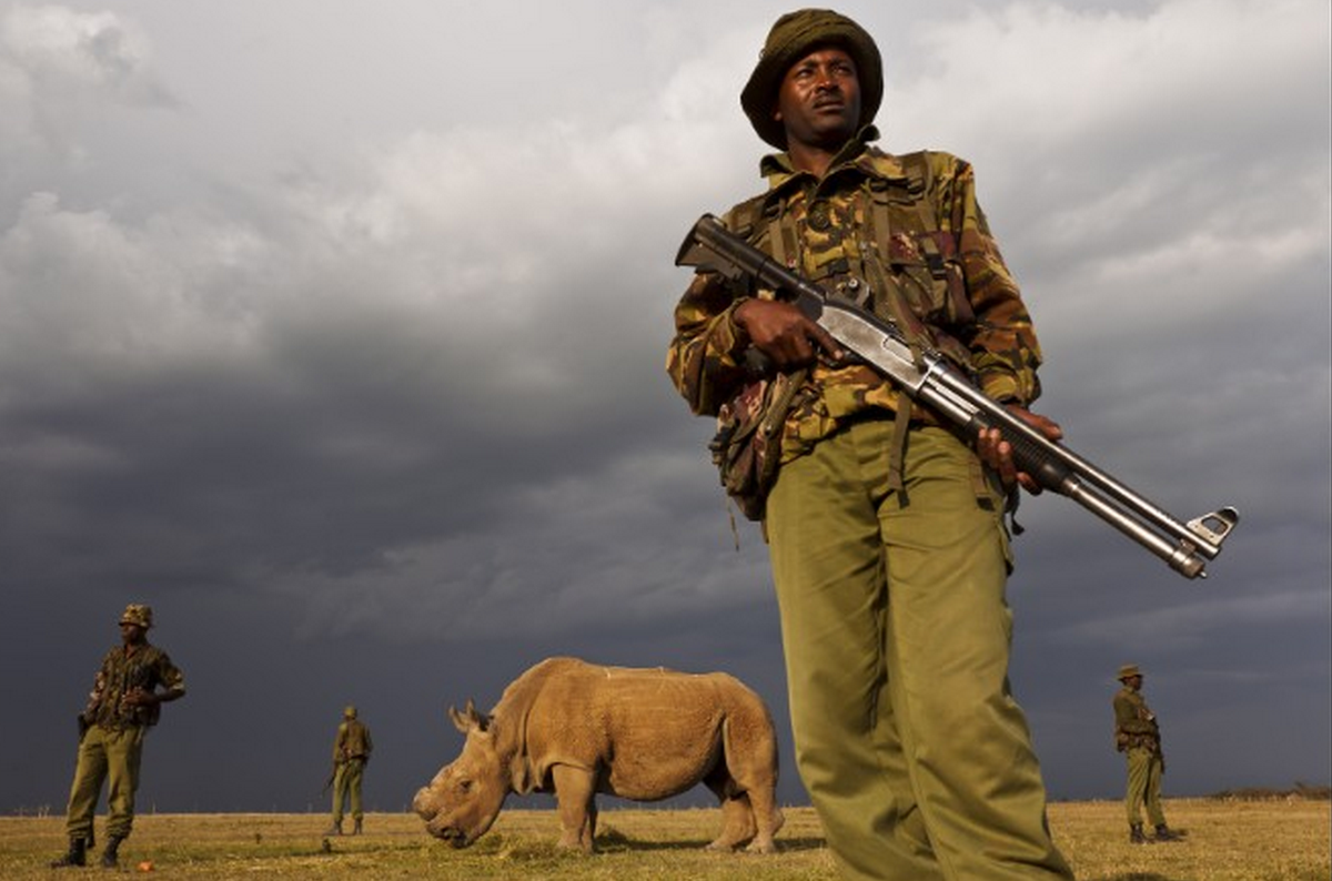 "So sad! 😱""@cnni: The last male northern white rhino in the world is under armed guard 24/7: http://t.co/FcWS9Q7w7Y http://t.co/1PrrEUSuHo"""