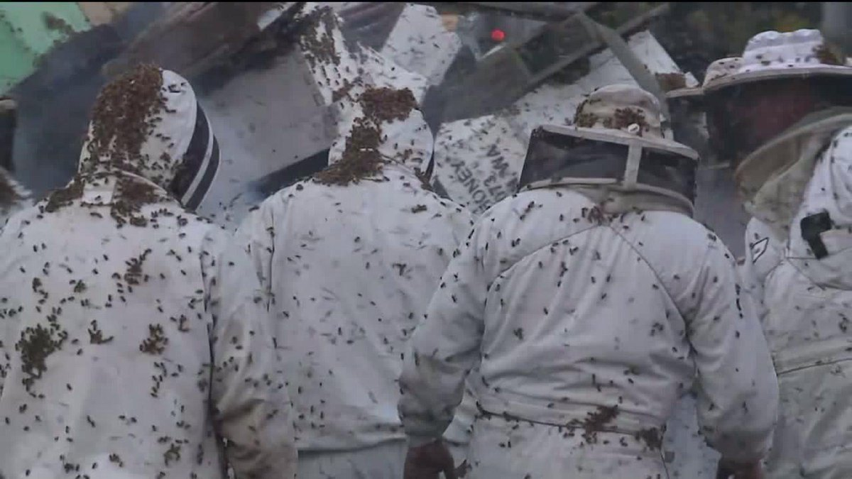 WOW.  Look. At. That. An incredible shot, but wow, mad props to the beekeepers out there. #q13fox http://t.co/zlUhO49Kun