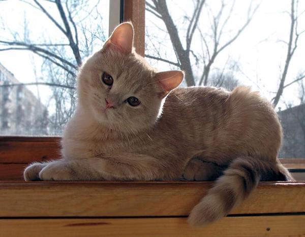 Cutest Cats Fullcathouse Twitter