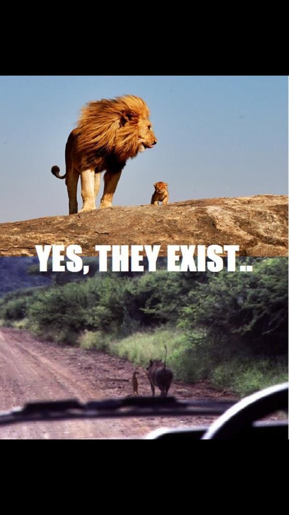 Nathan Delgado On Twitter Yes Simba They Do Exist Timon Pumba