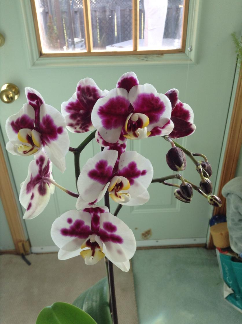 purple and white orchid blossoms against a backdrop of an exterior door with a window in it showing the outside