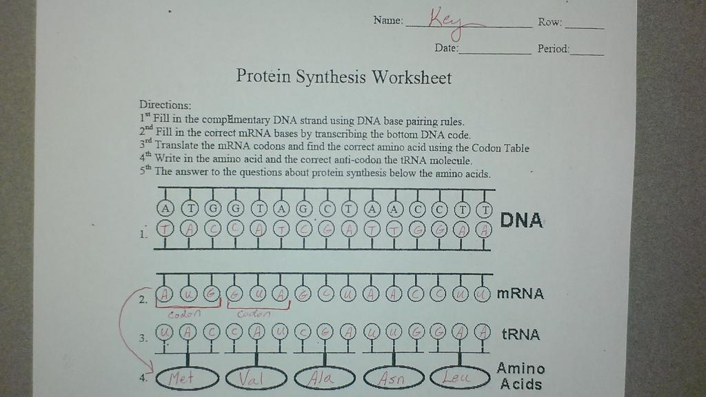 protein synthesis worksheet answers worksheets releaseboard free printable worksheets and. Black Bedroom Furniture Sets. Home Design Ideas