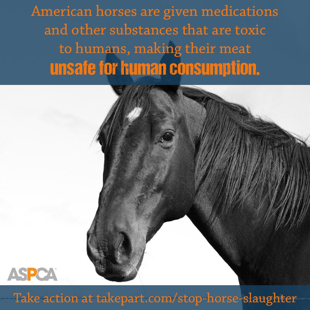 RT @ASPCA: Sign our petition & tell Congress to #EndHorseSlaughter for good! http://t.co/g0kIjaHQec #AdvocacyDay http://t.co/gr1won8AJZ