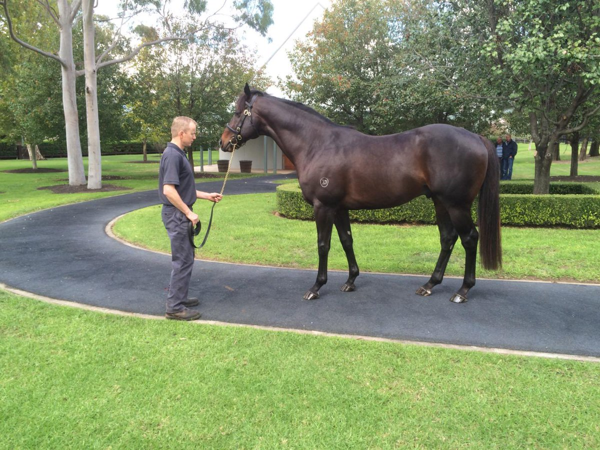 quick stud tour in Hunter. @coolmorestud yesterday and made a beeline to see this fellow ... Pierro. Magnificent. http://t.co/09iW3Vny9M