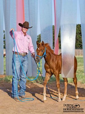 Win a foal training kit from @DownunderHorse !! Enter here >>> http://t.co/HcTnJWyGva #Horses #Foals http://t.co/UmacIjsqrr