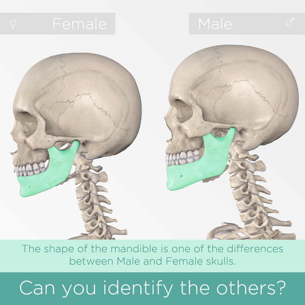 3d4medical On Twitter Pop Quiz Can You Tell The Difference