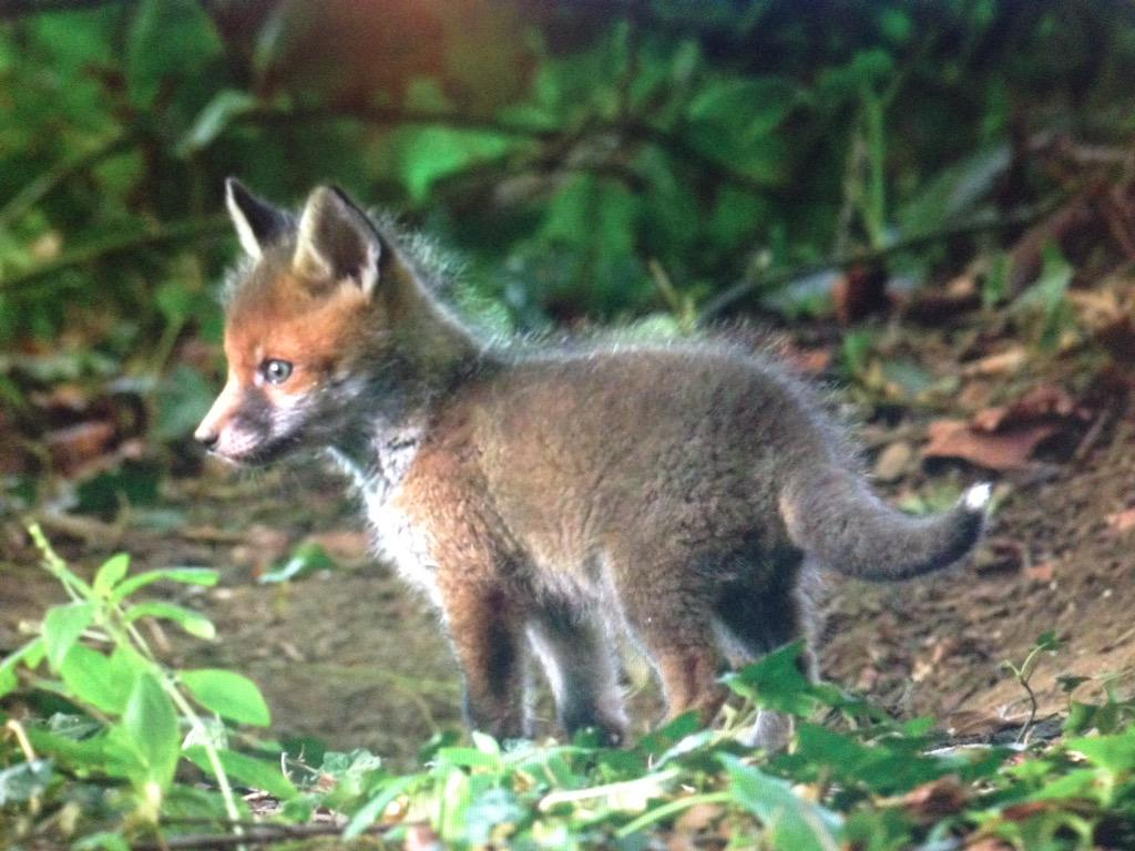 Who needs cute pictures of kittens when you can have this little character!on @BBCSpringwatch soon #EarthOnLocation http://t.co/lhyt8YCPnr