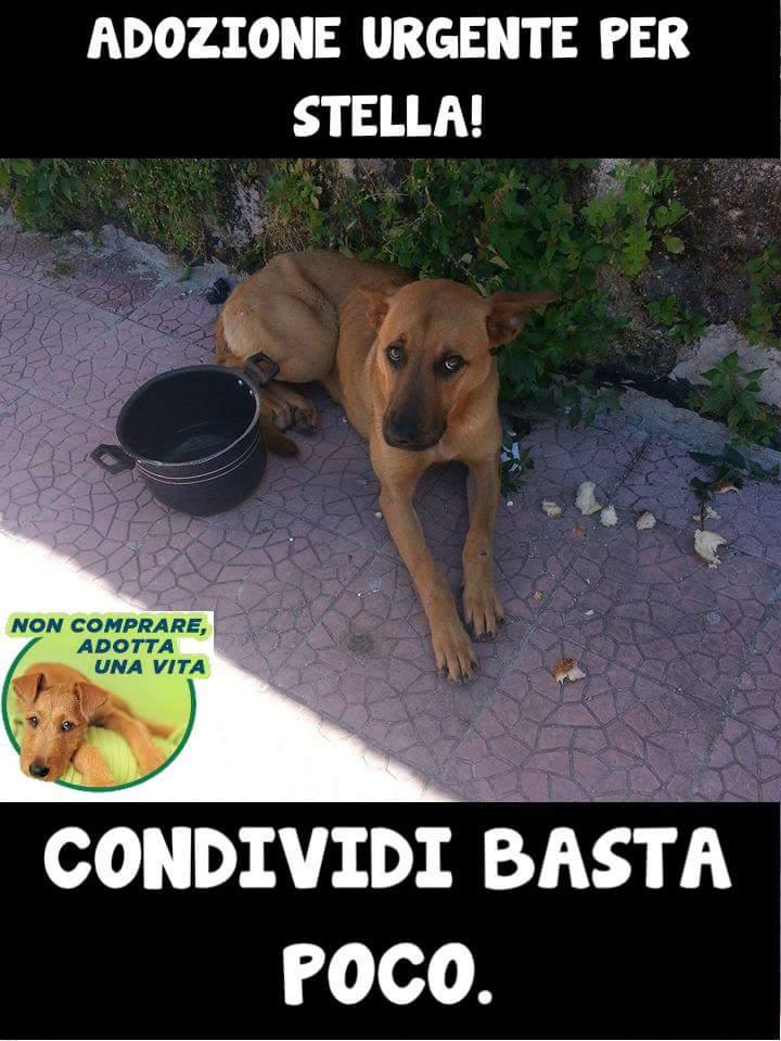 @ROBINDOG1 INFO 3314193360 #VIPREGO #AIUTO #URGEADOZIONEdelCUORE X STELLA SALVATAdallaSTRADA MA RISCHIA il CANILE pic.twitter.com/funQUIORr8