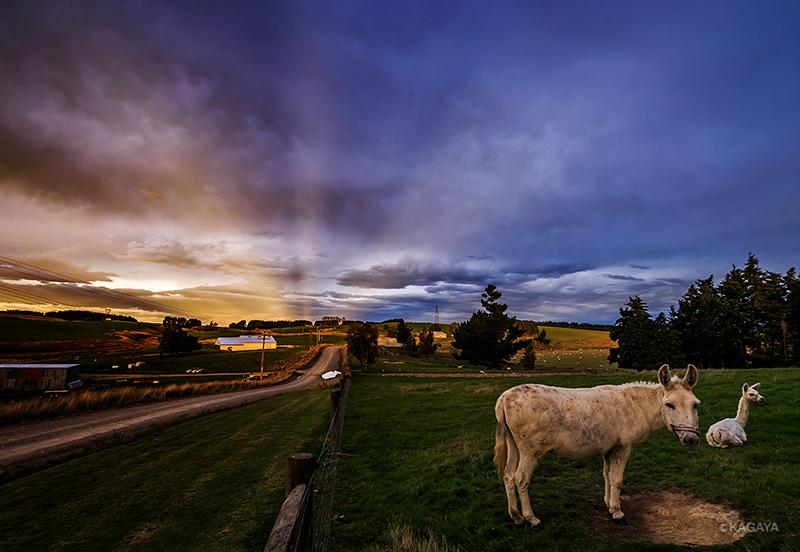 ニュージーランドの空、雲間からもれた夕日の光が反対方向に伸びて見えました。(反薄明光線とよばれます)今夜はこの牧場に泊めていただきます。 pic.twitter.com/7uXe7ginCP