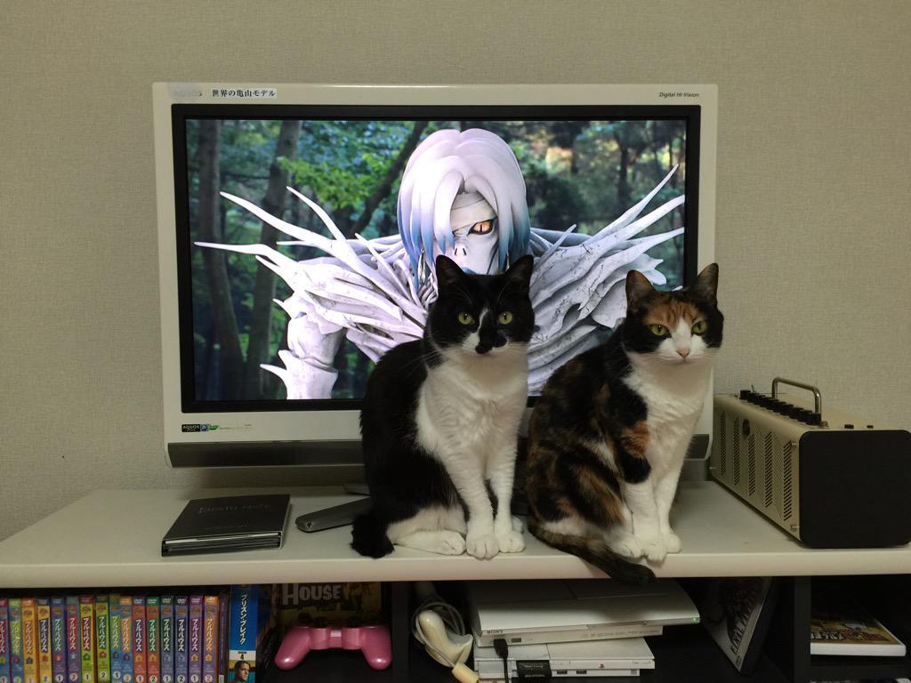 デスノート3割猫7割で見てるというか猫が俺を見てる pic.twitter.com/2lXOzNoujb