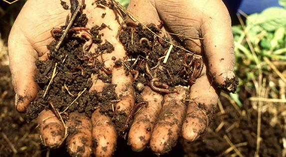 A healthy soil is a living soil - why soils are important for #biodiversity http://t.co/bDx8237W2N #SoilWeek #IYS2015 http://t.co/IQjCtETf5t