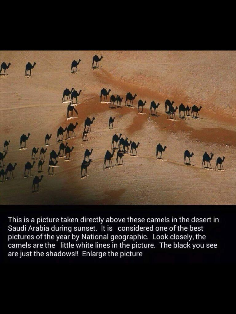 One of the best pictures of the year by National Geographic. http://t.co/U5um7bEvSj