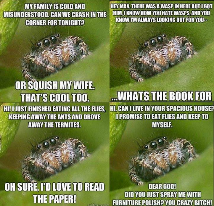 Please be nice to our spider friends! I always leave them be. Unless they are poisonous - then Morgan Smash http://t.co/YQbmzH3MR1