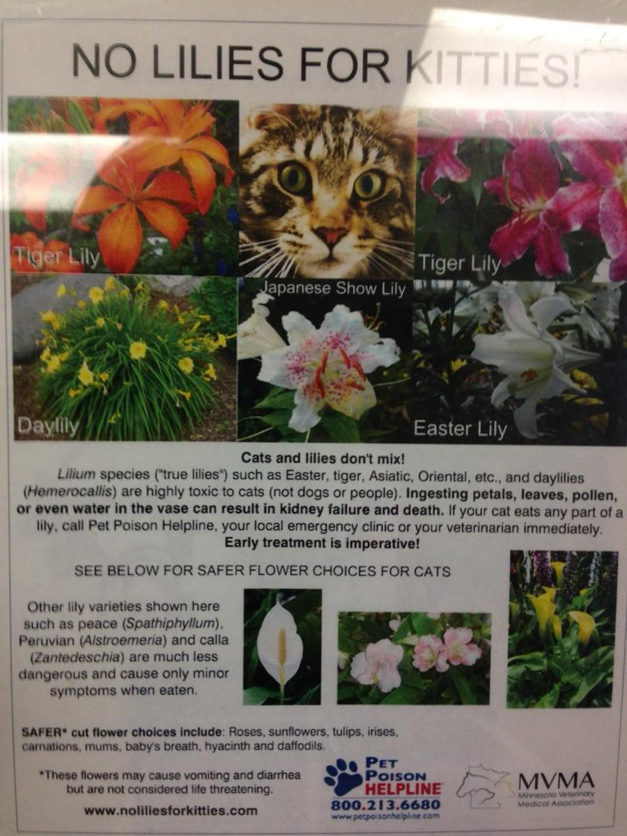 Erica Christoffer On Twitter Lilies Are Bad For Cats Here Are