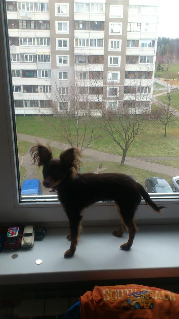 эта моя собака смотреть онлайн: