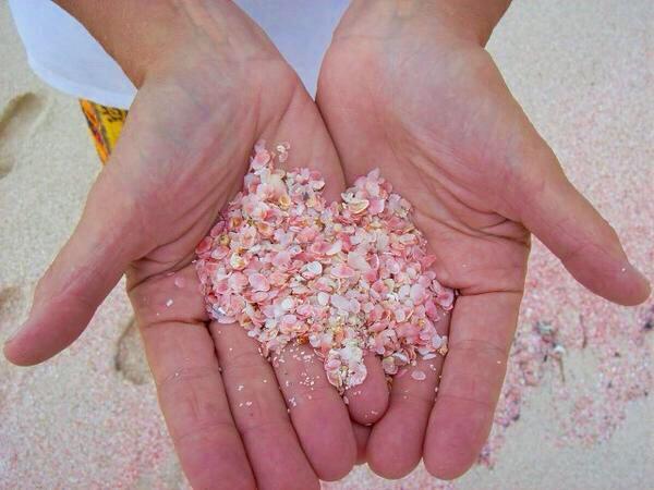 コモド島のピンクサンドビーチすごい…。赤サンゴが白砂に混ざったらしい。 pic.twitter.com/XCUeN6Nfnr