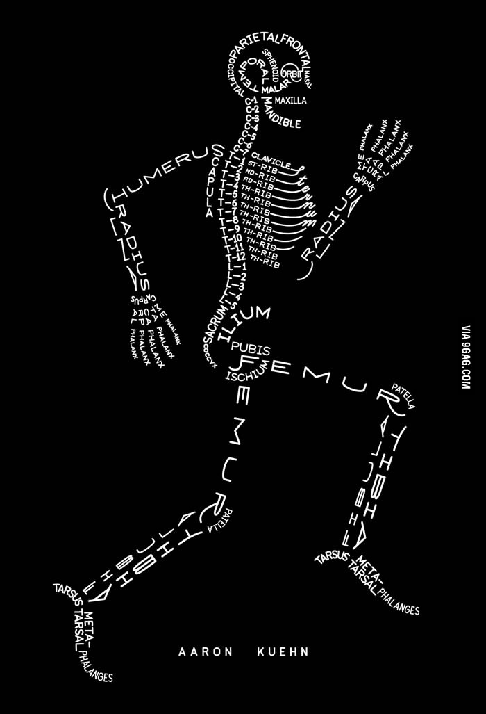 A good way to remember the names of the bones in the skeleton. #science #biology #education http://t.co/RDhTOQZ1ij