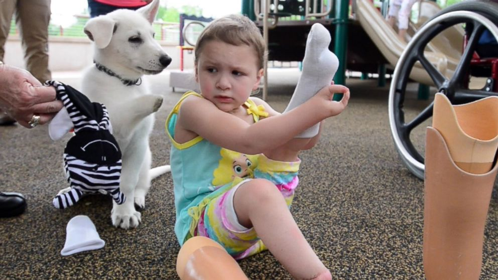 มีคนติดต่อรพ. (ในสหรัฐฯ) ว่าอยากนำลูกหมาไม่มีอุ้งเท้ามาให้อยู่กับเด็กไม่มีขา และความผูกพันครั้งใหม่นี้จึงเกิดขึ้น... http://t.co/IoZ6rEh6Au