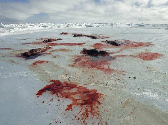 Fishermens' #sealhunt  wasteful enough, but now w/ world mrkts closed,is stockpiling pelts at taxpayer expense wise? http://t.co/wLJhuZBlnv