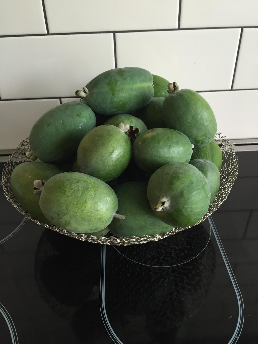 When I was at Otago our mums used to send us feijoas. Anyone know a student in #Dunedin I can pay it forward to? http://t.co/tY8E635tx2