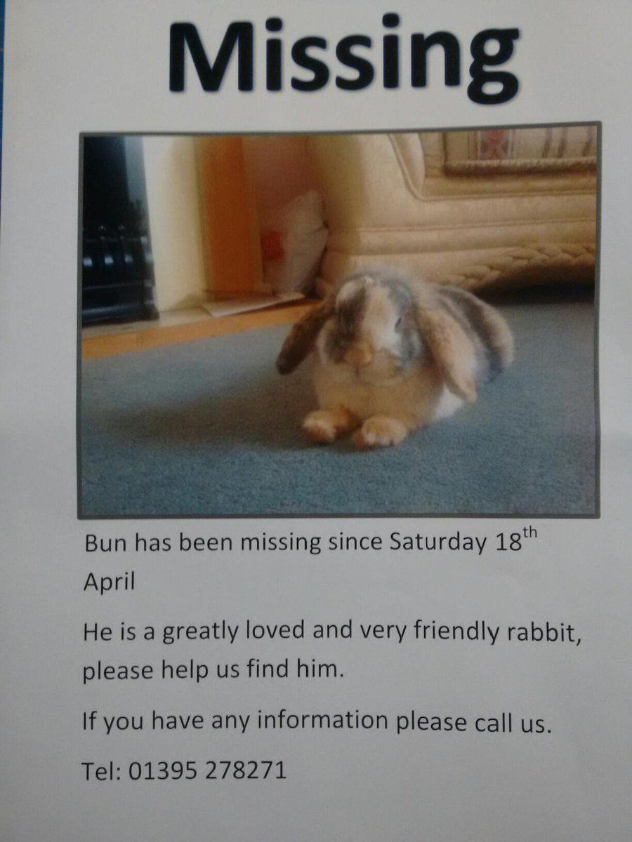 My friend Steph lives with her family in #Exmouth, and they've lost their rabbit. Please Retweet. (cc @Devon_Hour) http://t.co/V62p8LKyP5
