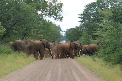 Volunteers needed for elephant ops http://t.co/7j0i1HhjxM #TheZambezi #ExploreZambezi http://t.co/Aw0BkqT2wC