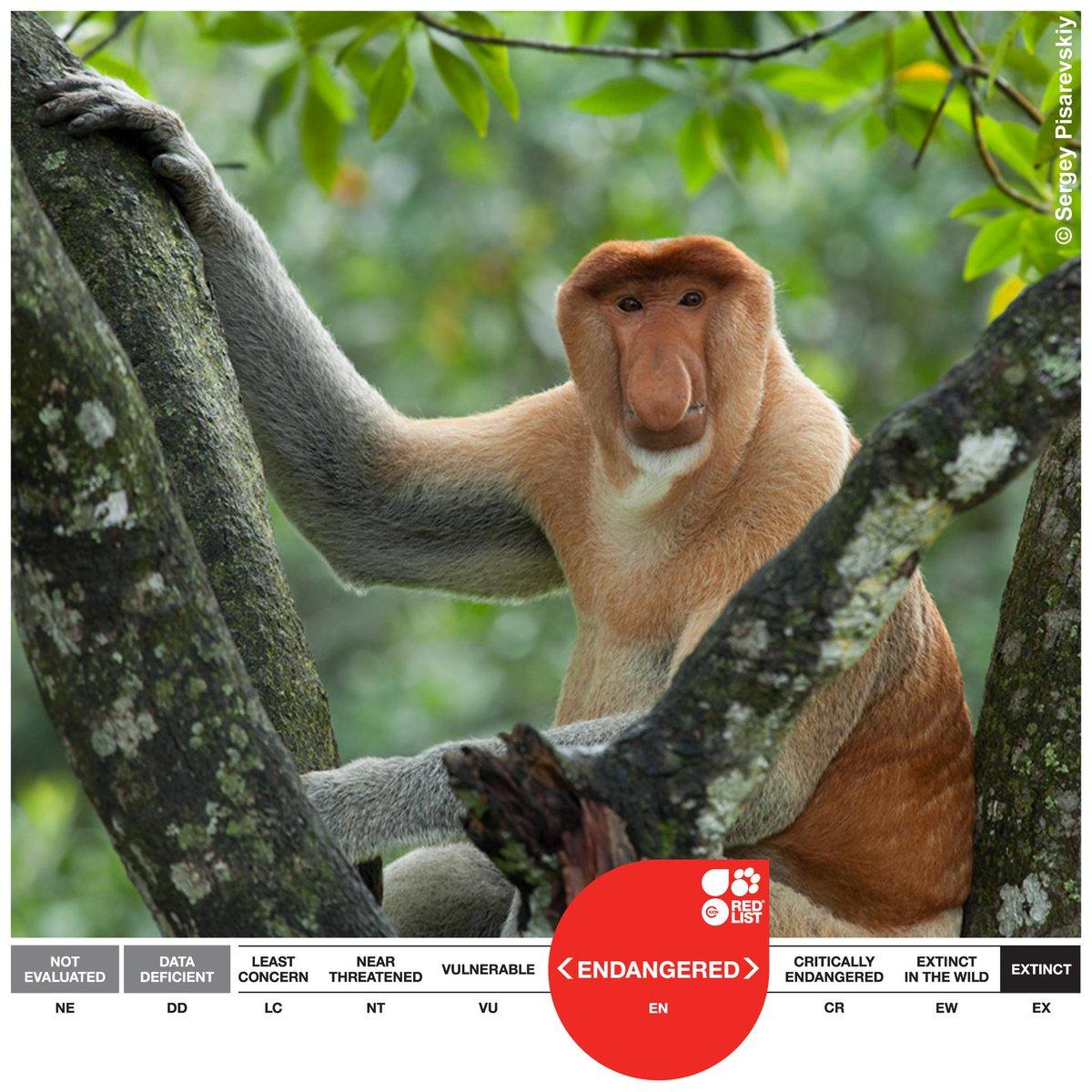 IUCN Red List on Twitter: