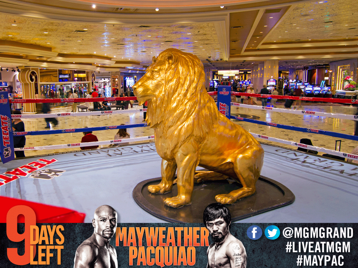 Mgm Grand Hotel On Twitter Our Lion Is Set Ready For Action Maypac Vegas Mayweatherpacquiao Http T Co Qthem9itlc
