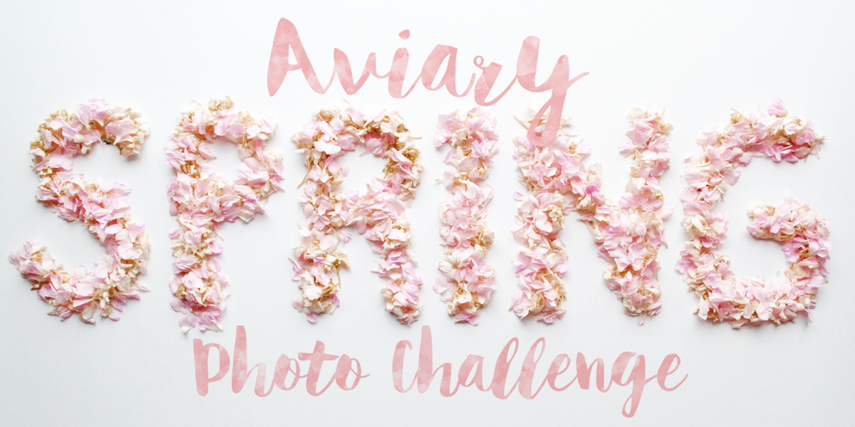 Calling all photographers! Get in on our spring #aviarychallenge for a chance to win big! http://t.co/DoDgcyvgBt http://t.co/2JZc3aDkra