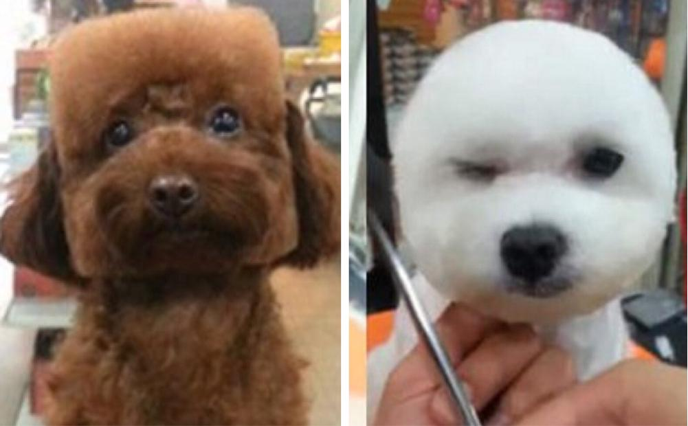 Geometric dog grooming is all the rage in Taiwan right now 🐩⬜️❤️ http://t.co/z4cKwRQpxE http://t.co/b0IQlqTXFf