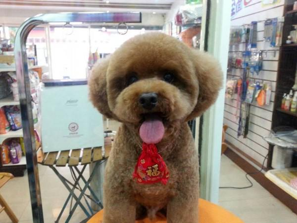 Square / round dog haircuts is how our week ends. http://t.co/h6liJkzPD8 http://t.co/xcRkGPcgUB