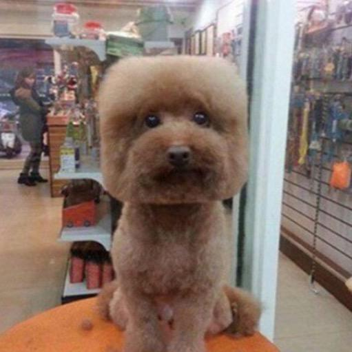 Owners Cutting Their Dog's Fur So They Have Square Faces & It's Everything (via @TheDebrief) http://t.co/hyQFMg0HgB http://t.co/NS18oOPJZu