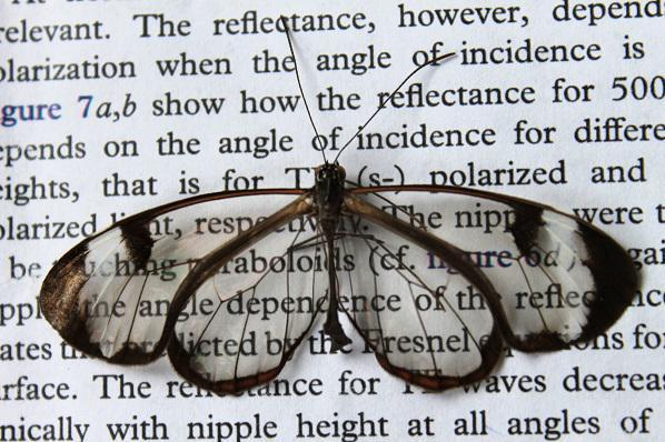 蝴蝶翅膀将会是屏幕不再反光的秘密!-来自德国的研究员发现一种名为 Glasswing 蝴蝶的透明翅膀上,有着不规则、纳米级的结构。 http://t.co/T6teGQ11yl @EngadgetChinese (图:KIT) http://t.co/xKcnP3ylP1