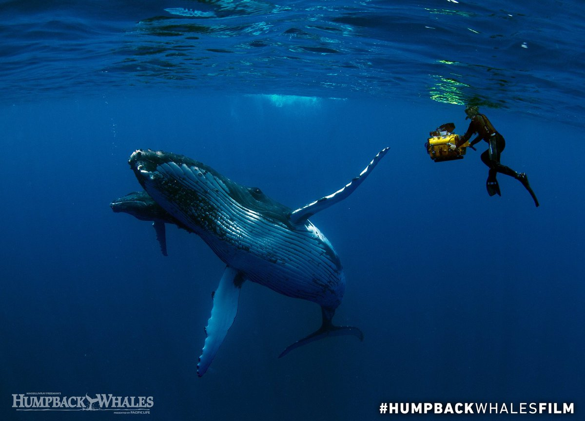 Learn more about how to #HelpHumpbacks - inspired by our new #IMAX film #HumpbackWhalesFilm. http://bit.ly/helphumpbacks