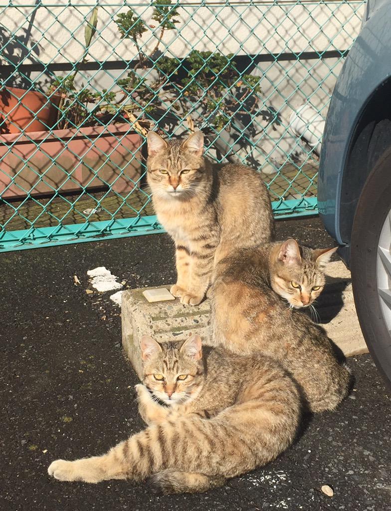2ヶ月くらい前に近所で撮ってツイートしたら3万近くリツイートされたPerfumeぽい3匹の猫の写真がとうとうテレビ番組の中でPerfume本人たちの目に触れた!「似てるー!」と言ってくれてた。感慨深い。 http://t.co/dYWLdI0juC