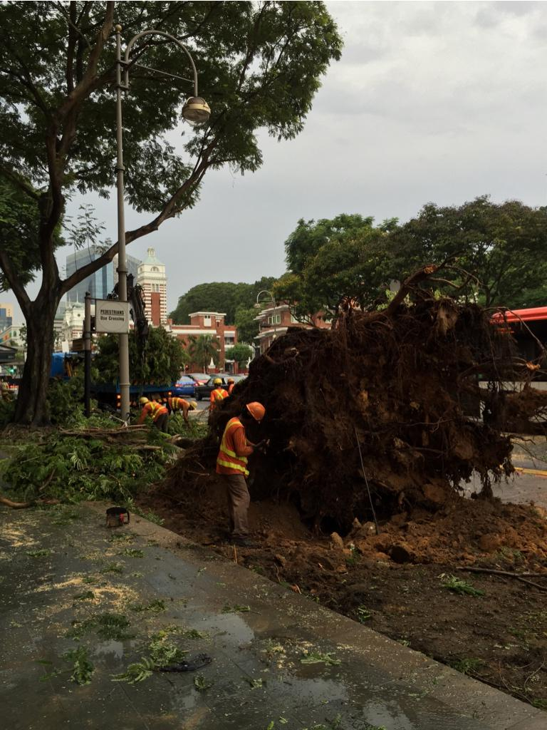 Avoid City Hall, Chijmes and Raffles City as roads are partially blocked due to fallen trees. #sgtraffic http://t.co/ChwPR99z0n