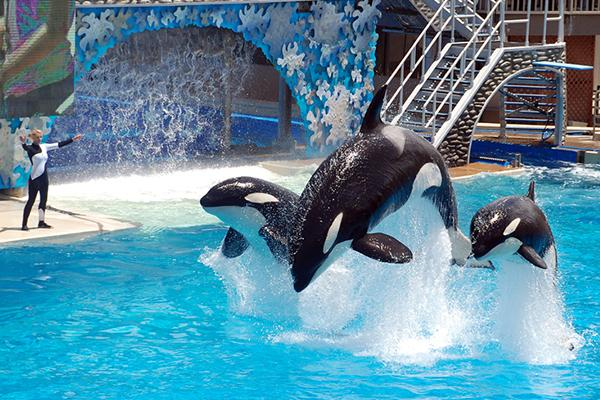 Now @SeaWorld claims the ocean is a 'poor choice' for #orcas. What a joke. http://t.co/zxGhm44a9P @WHALES_org http://t.co/amh7mwwVJw