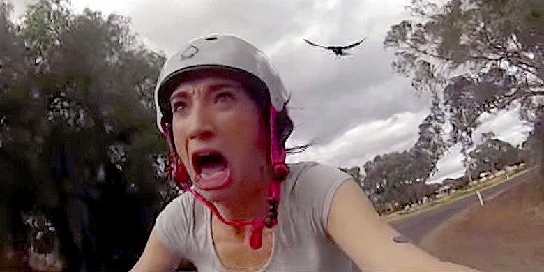 Female Cyclist Hilariously Reacts To Swooping Magpies http://t.co/m7VI2kXwRL http://t.co/I9nxfZLQc2
