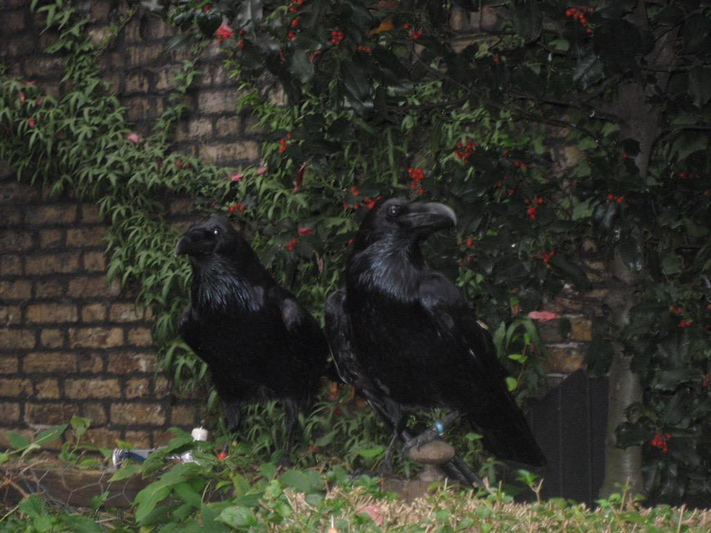 @ravenmaster1 I'm sure you get a ton of these, but here's my favorite photo from my tower trip. Love your tweets. :) http://t.co/7Ymi7AnGe1