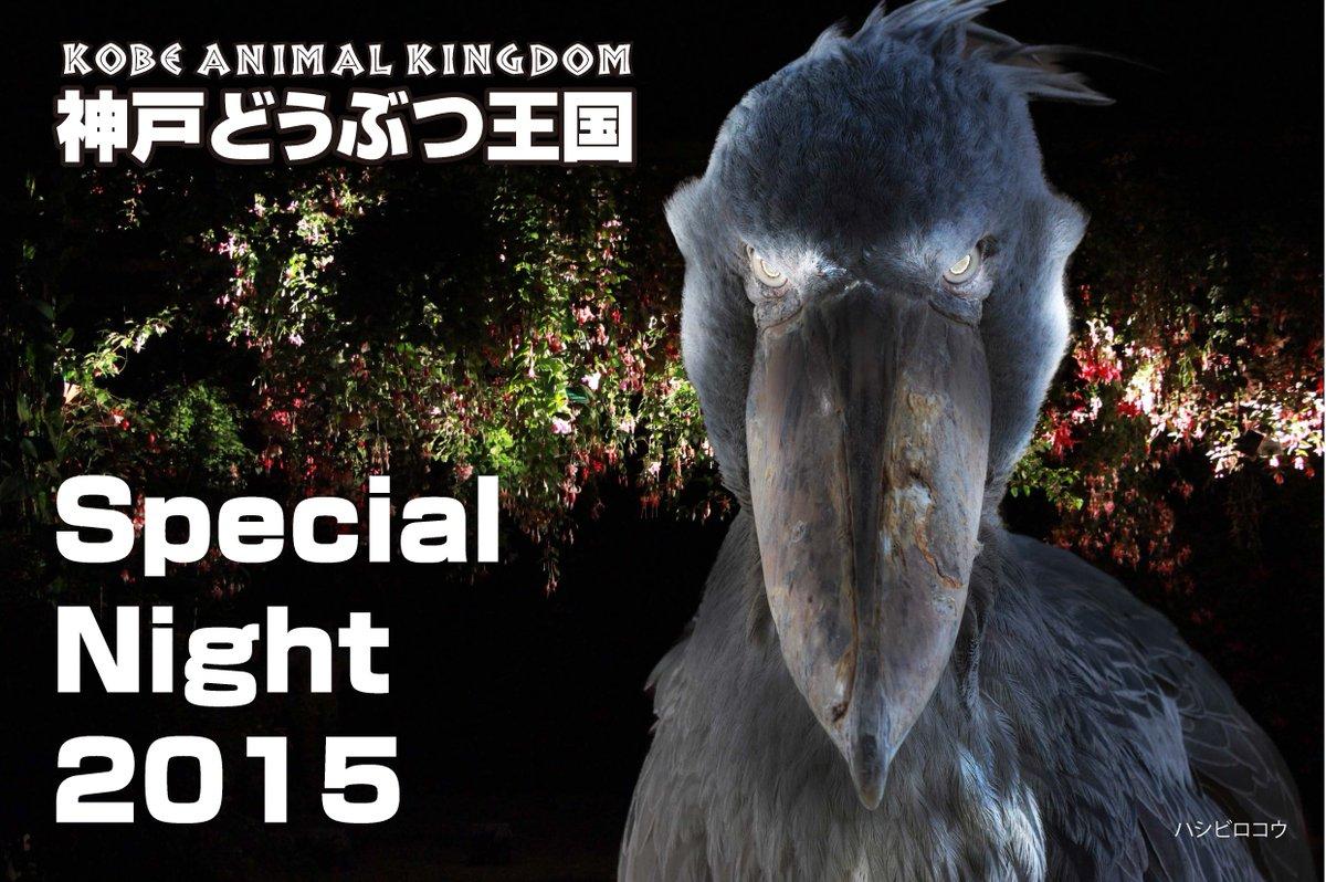 神戸どうぶつ王国の次なる挑戦はスペシャルナイト!5月2日~6日は21時までロング営業~この夜、光に彩られた動物たちと花々の神秘的な世界が広がる。ハシビロコウが光で闇夜に浮かび上がるフロートライトで光るプールで泳ぐカピバラを見れるかも。 http://t.co/8HPaBee0MK