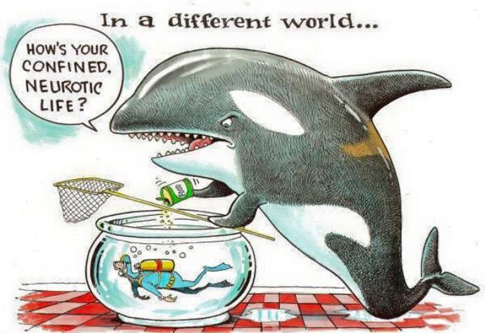 Dear @SeaWorld, How would you like living in a bathtub being forced to do tricks for food? #AskSeaWorld http://t.co/VgVFMNsaBU